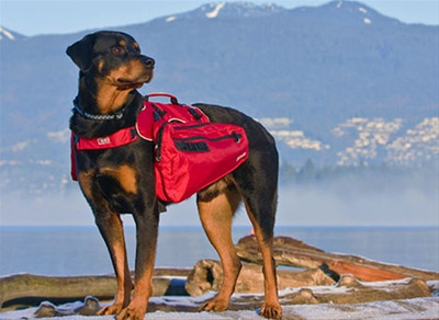 Canine_equipment_ultimate_trail_p_2